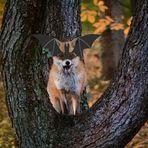 Fuchs-Halloween