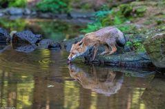 Fuchs im Wald :-)