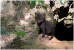 Fuchsbaby #2