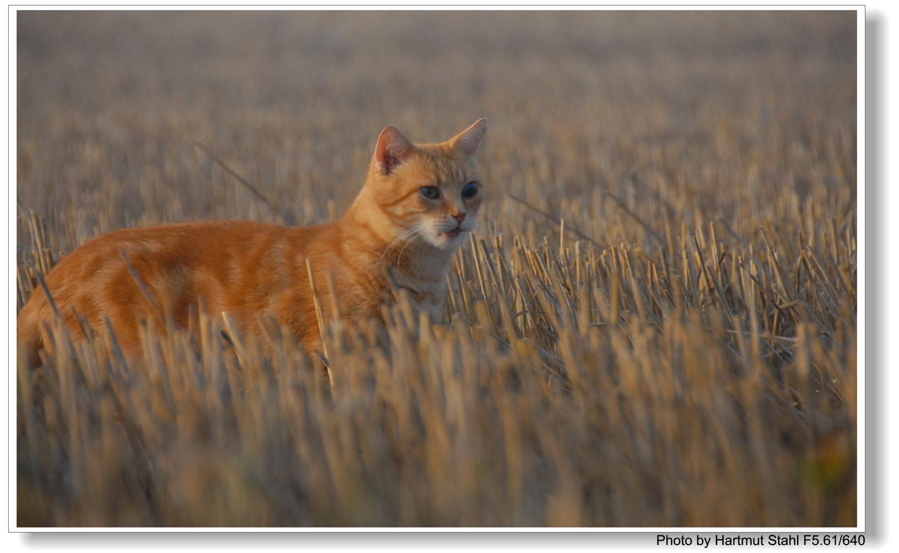 Fuchsie