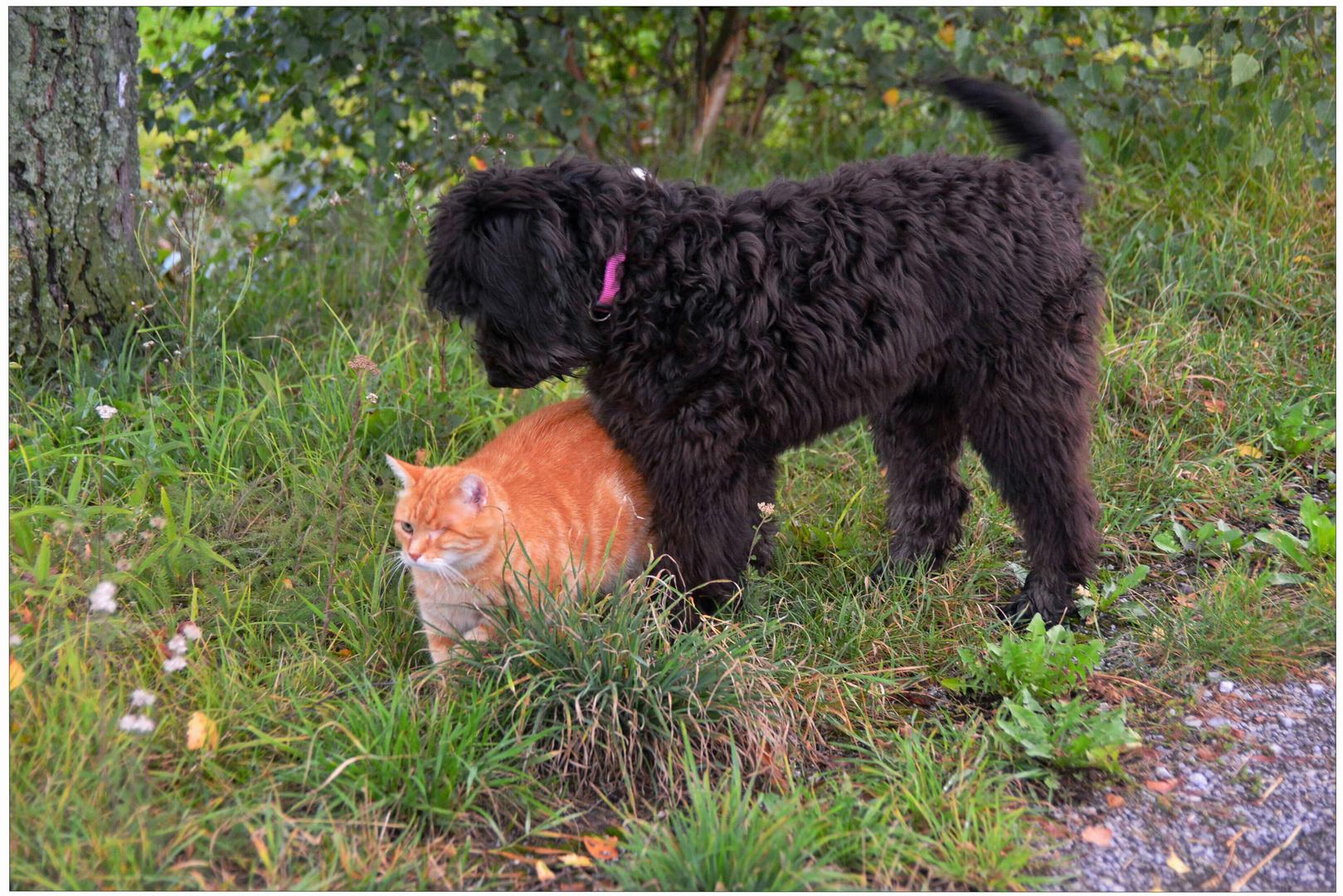 Fuchsie und Wicky-Emily werden Freunde (Zorrito y Wicky-Emily se hacen buenos amigos)