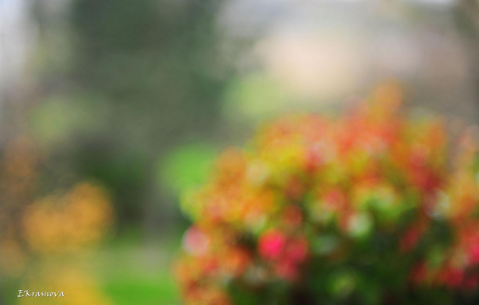 Fuchsien. Herbst
