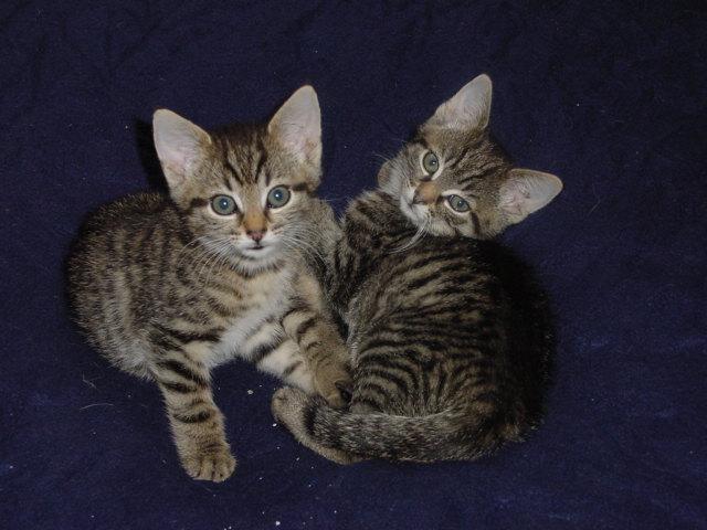 Fuchur und Bonnie :-)