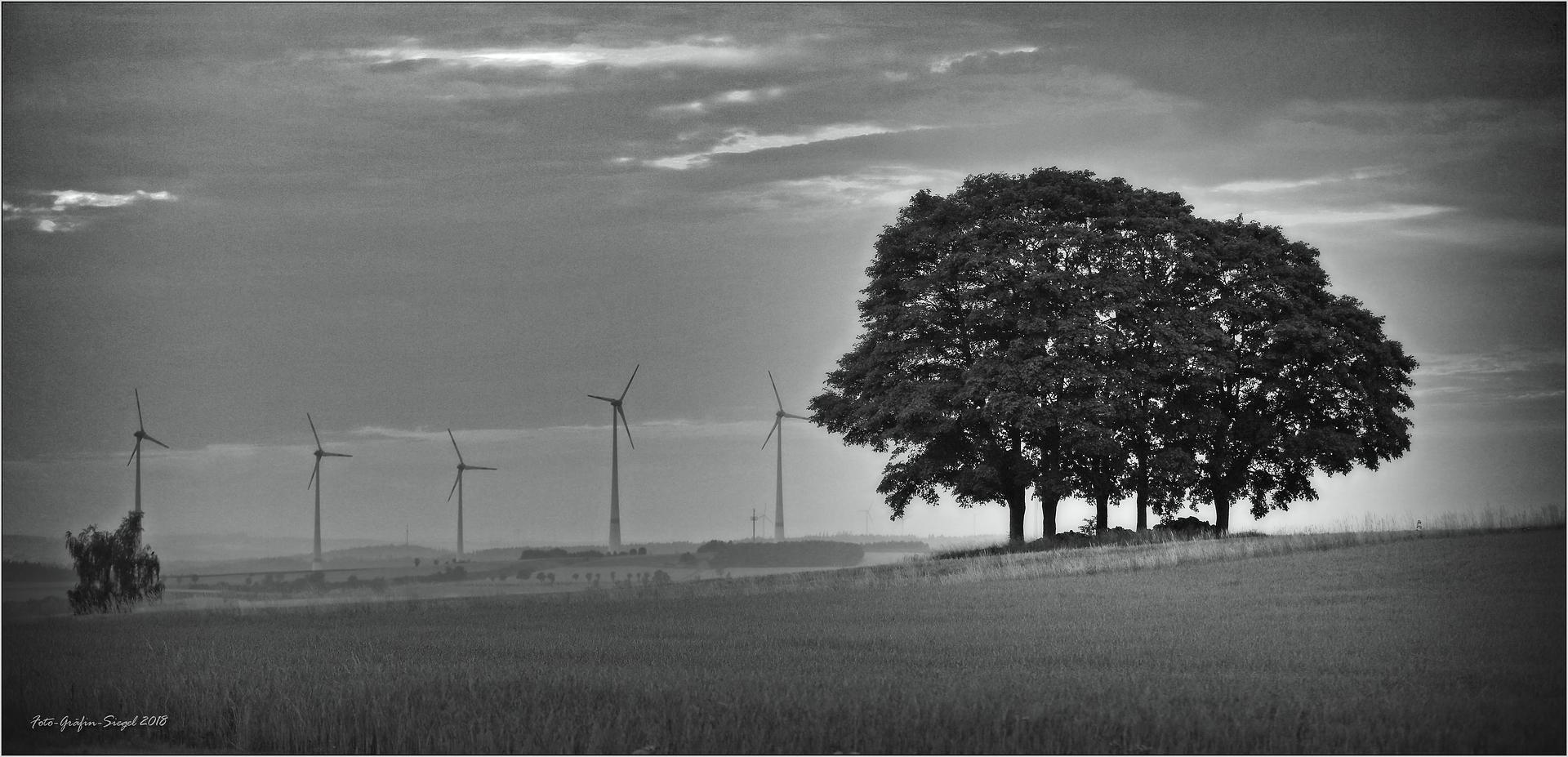 Fünf Windmühlen versus Fünf Bäume ...