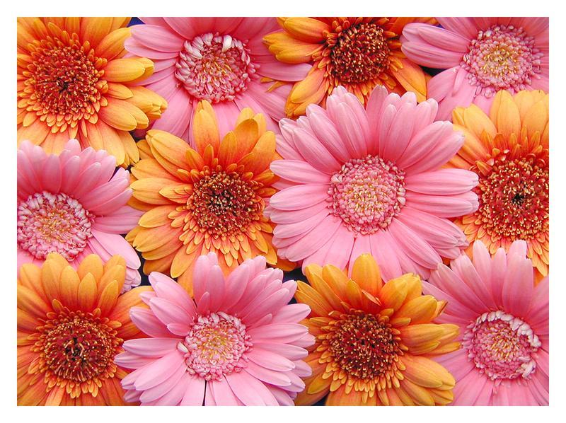Für alle FCler, die Blumen lieben