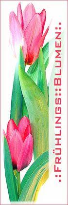 .:Für das Frühlingsblumen-Übersichts-Buch:.