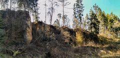 Für den kranken Wald ist zur Zeit kein Intensivbett mehr frei