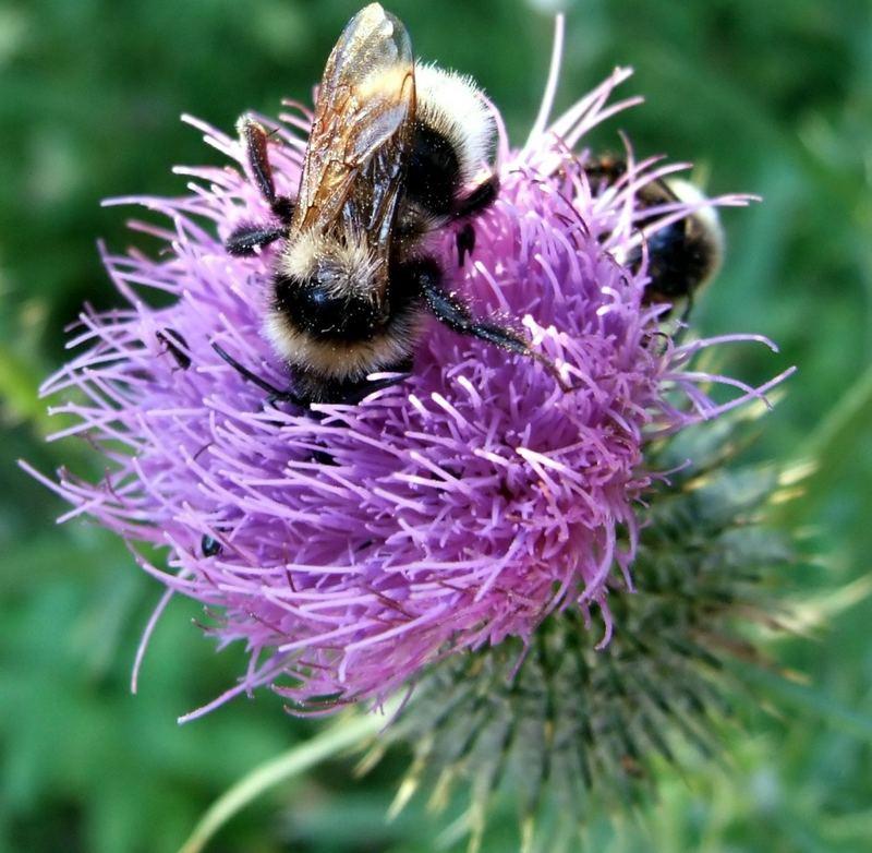 f r den leckeren wald bienen honig foto bild tiere wildlife insekten bilder auf. Black Bedroom Furniture Sets. Home Design Ideas