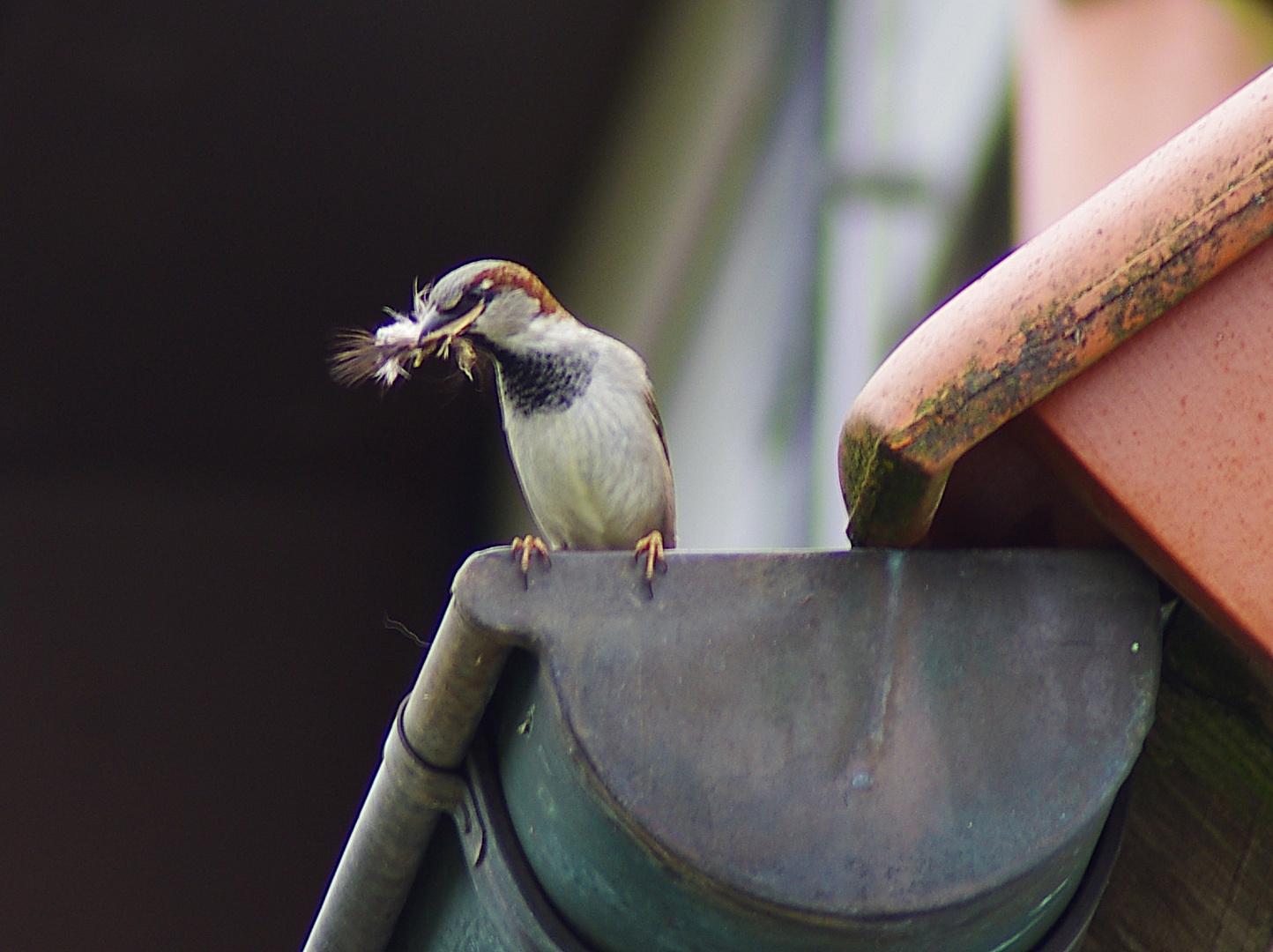 Für den Nestbau