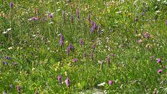 Für den Orchideenfreund  aus dem Wallis 250 Meter oberhalb von SaasFee