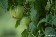 Für den/die eine/n grüne Tomaten,den/die andere/n grüne Paradeiser,für mich ein Genuss