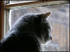 ..für die Katz