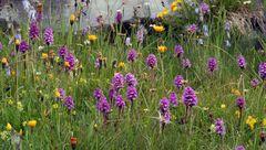 Für die Orchideenfreunde von ganz weit oben...
