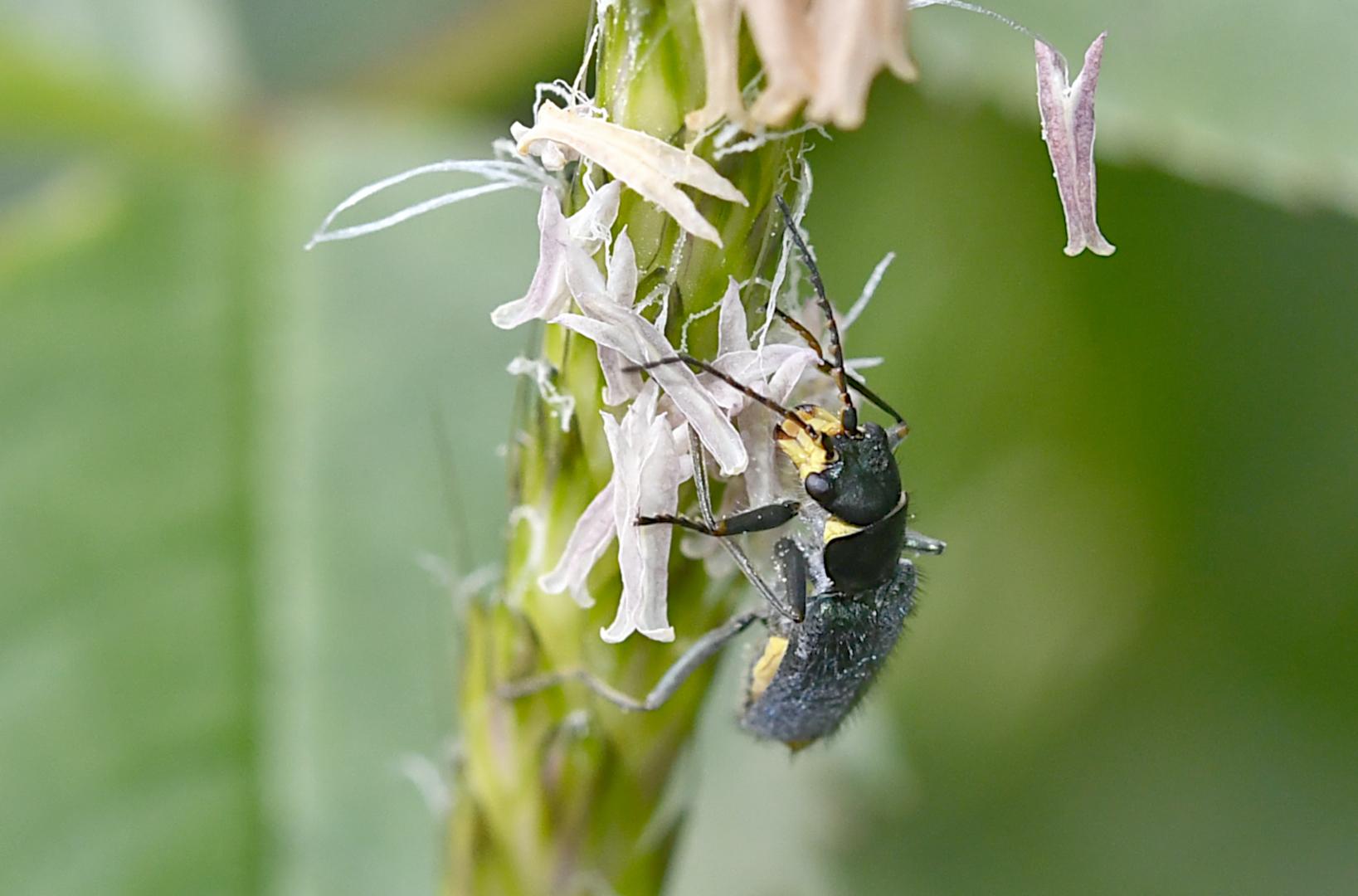 Für einen winzigen Käfer...