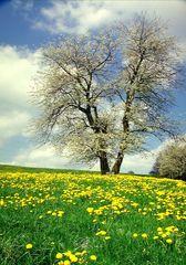 Für Emmi 14 einen Frühling Gruß aus Sachsenried