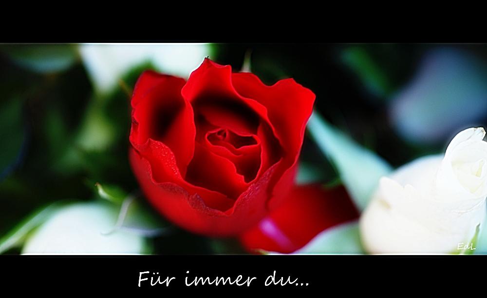 Für immer du...