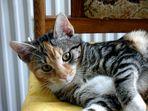 Für Katzenkenner PAUL