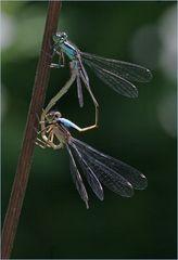 Für Libellen...
