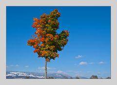 Für mich ist immer noch Herbst....