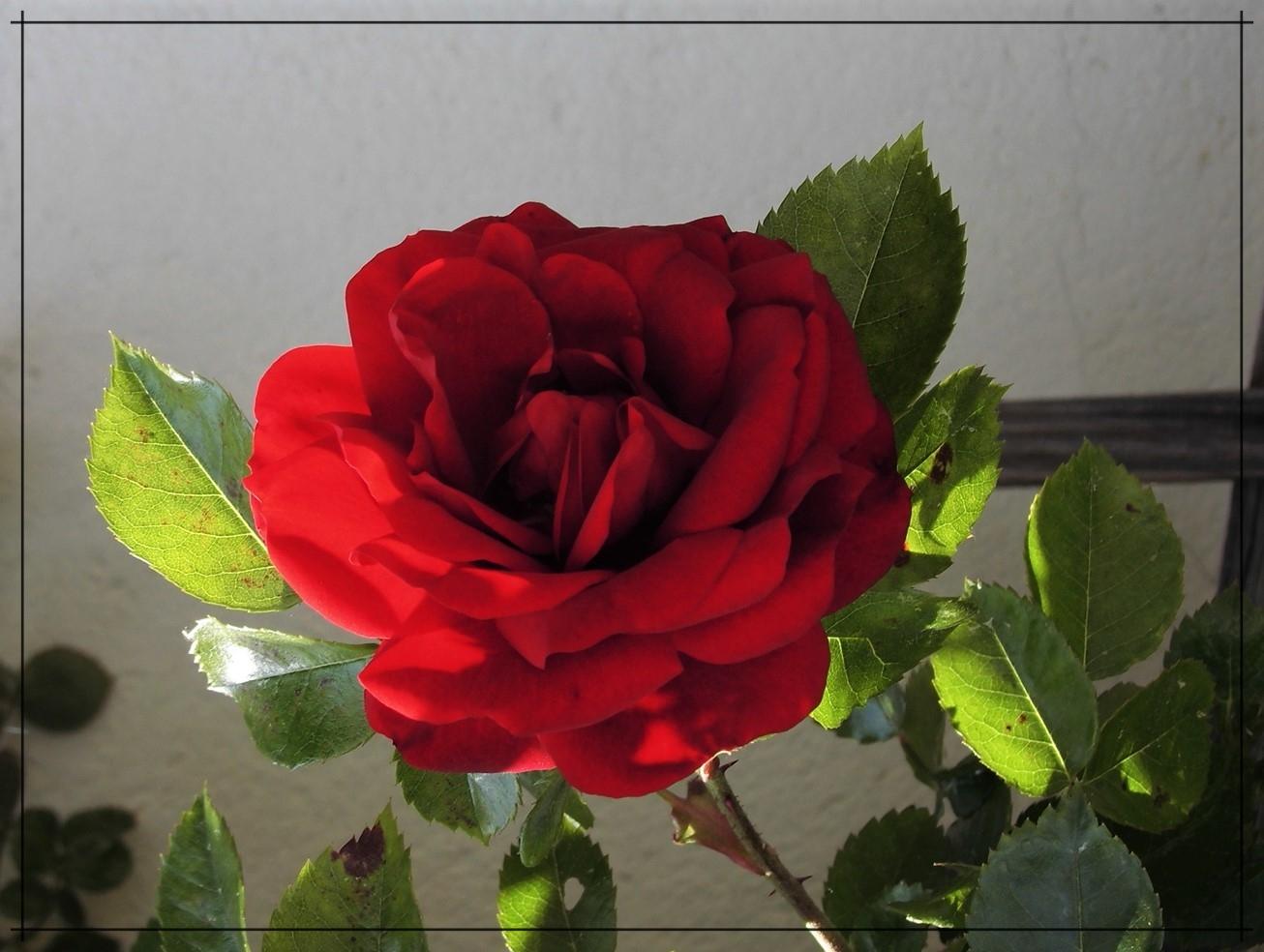 Für Reinhard