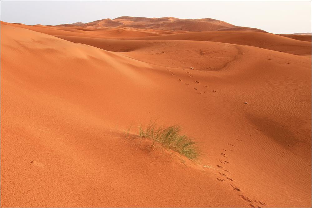 ....für Sylvia M....ja, die Wüste hat was weiblich erotisches