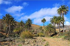 Fuerteventura 18