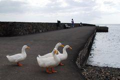 Fuerteventura 2008 VII