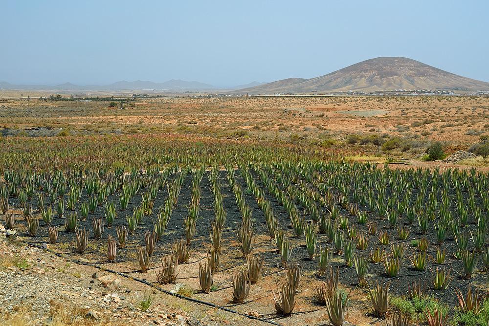 Fuerteventura Impression Juni-Juli 2013 Nr.41.