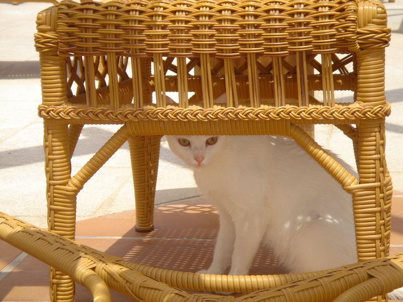 Fuerteventura - Urlaub 2006