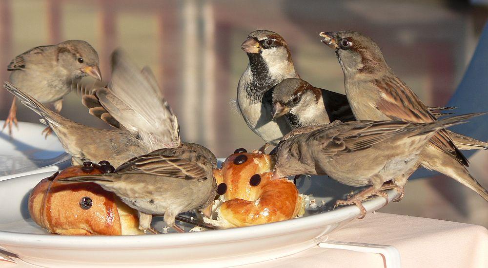 """Fütterung der """"Raubtiere"""" ;-)"""