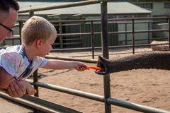 Fütterung von Papas Arm aus  im Serengetipark