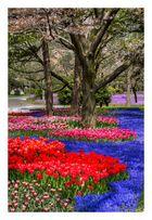 Full Bloomed flowers-2