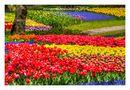 Full Bloomed flowers by Tad Kanazaki