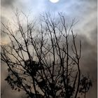 Full Moon and Almost-Winter Trees