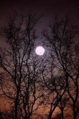 Full Moon (mal anders)