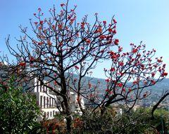 Funchal, Madeira (II)