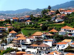 Funchal, Madeira (IV)