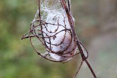 Fundsachen aus der Natur