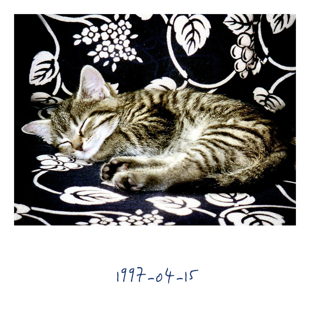 Fundstück [1997-04-15]