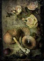 Funghi e Rose ...