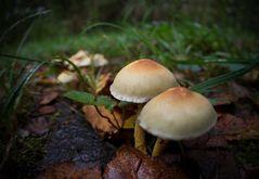 * fungi *
