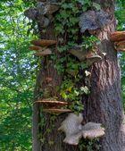 """Fungi Tree"""