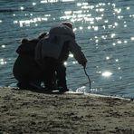 Funkel Perlen auf dem See