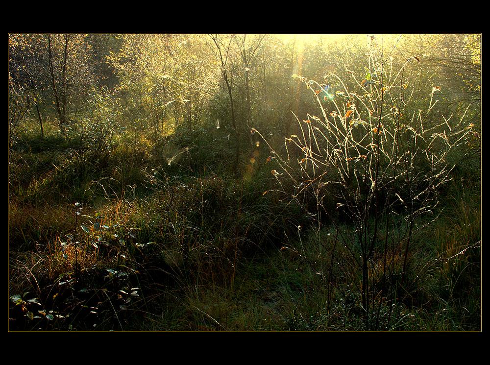 """...funken-sprühendes Moor-Licht... - ...war es das... ? (8. der Serie  """"Mecklenbruch"""")"""