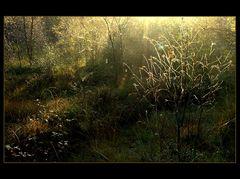 "...funken-sprühendes Moor-Licht... - ...war es das... ? (8. der Serie  ""Mecklenbruch"")"