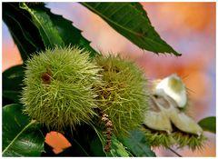 Funkkolleg Botanik - Teil 2