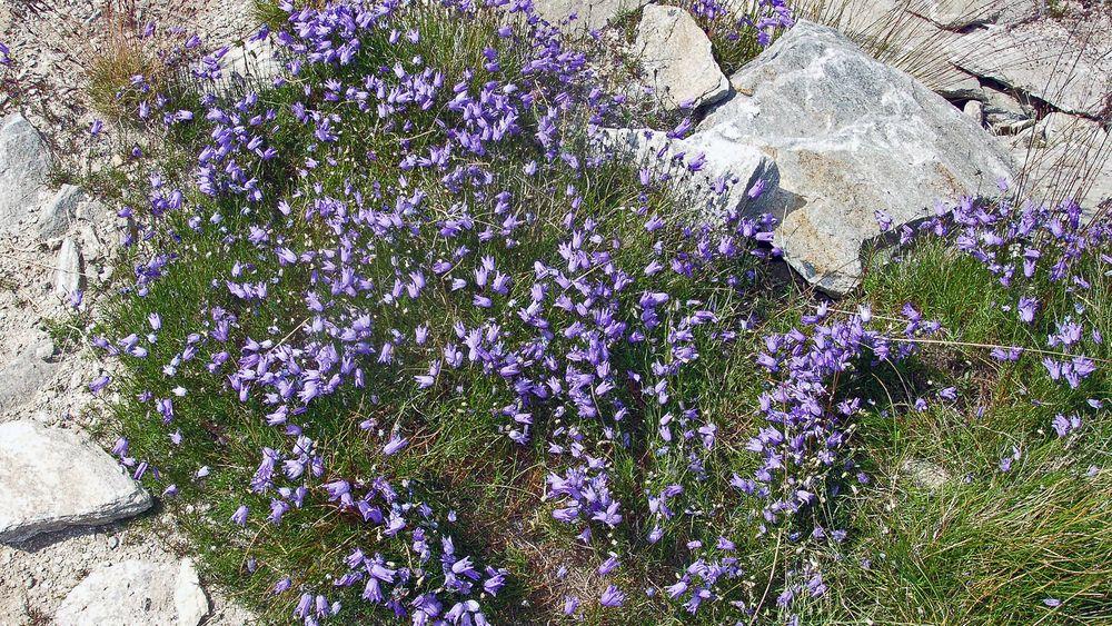 Funktioniert es mit den hochalpinen botanischen Raritäten im Flachland ...