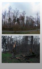 Fuori e dentro il bosco in una giornata di vento (1)