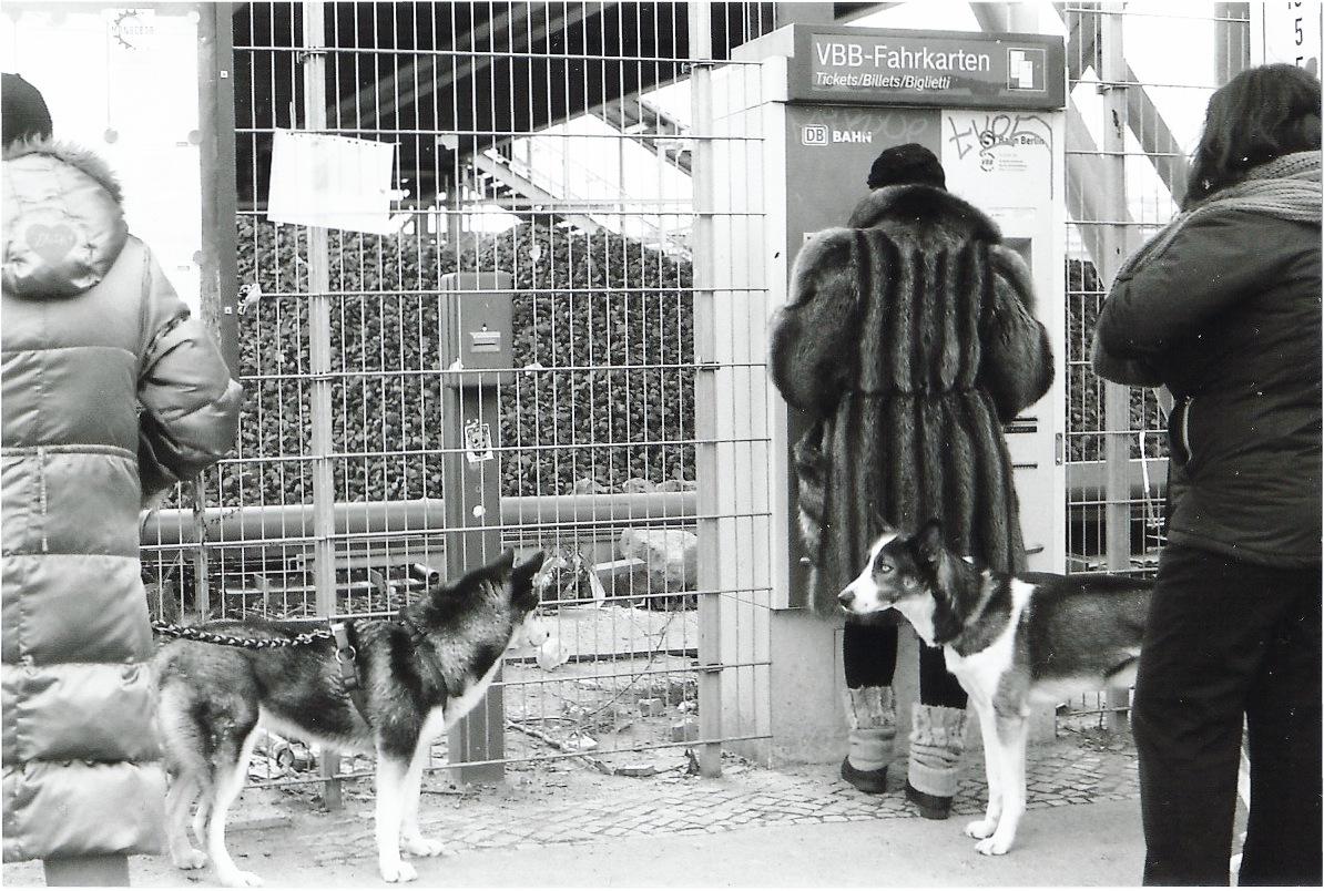 Fur & Dogs