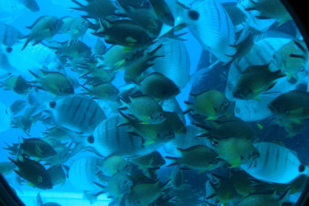 Fureteventura Unterwasser mit dem SUBCAT